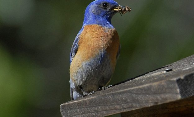 10 Reasons to be Thankful for Birds