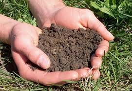 Get your Soil Tested