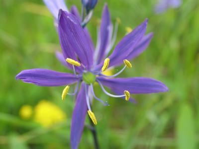 CONSERVATION – Native Plant Study Group
