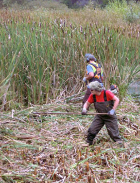 CONSERVATION – Rithet's Bog Conservation Society